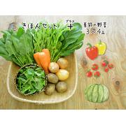 【10品目】旬の有機野菜セット