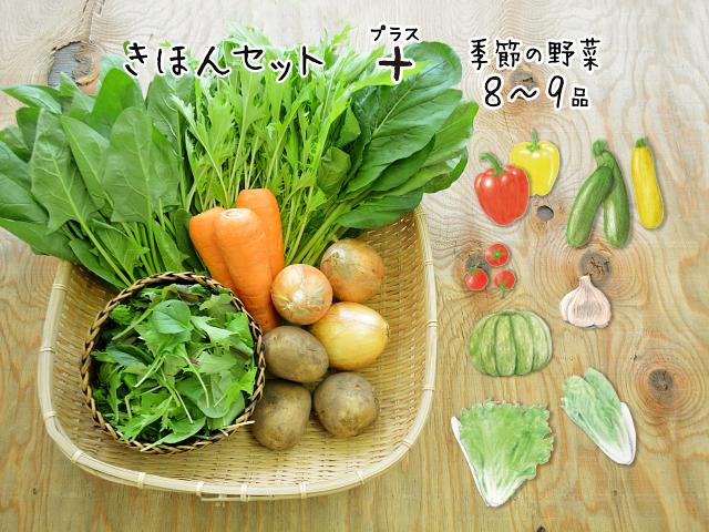 【15品目】旬の有機野菜セット